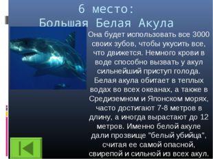 6 место: Большая Белая Акула Она будет использовать все 3000 своих зубов, что