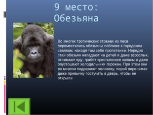 9 место: Обезьяна Во многих тропических странах из леса переместились обезьян