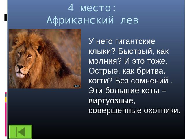 4 место: Африканский лев У него гигантские клыки? Быстрый, как молния? И это...