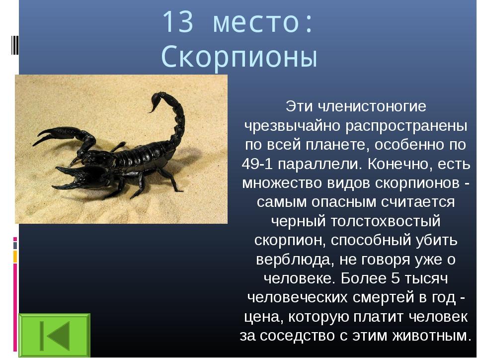 13 место: Скорпионы Эти членистоногие чрезвычайно распространены по всей план...