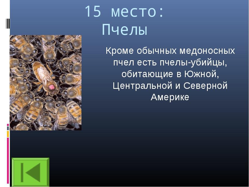 15 место: Пчелы Кроме обычных медоносных пчел есть пчелы-убийцы, обитающие в...