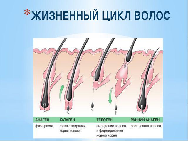 Почему растут быстро волосы на теле