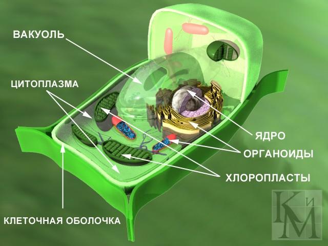 http://www.megabook.ru/MObjects2/data/pict2007/06m1104.jpg