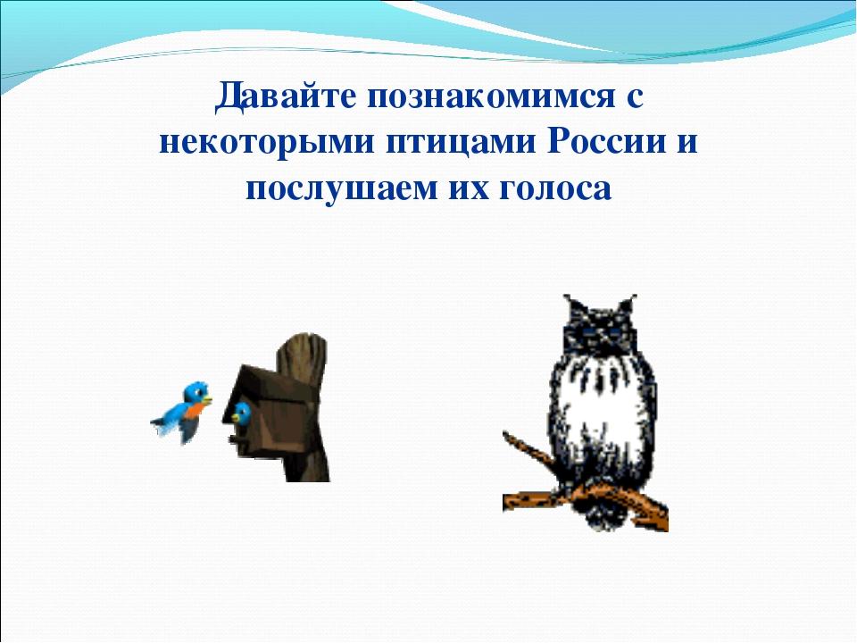 Давайте познакомимся с некоторыми птицами России и послушаем их голоса