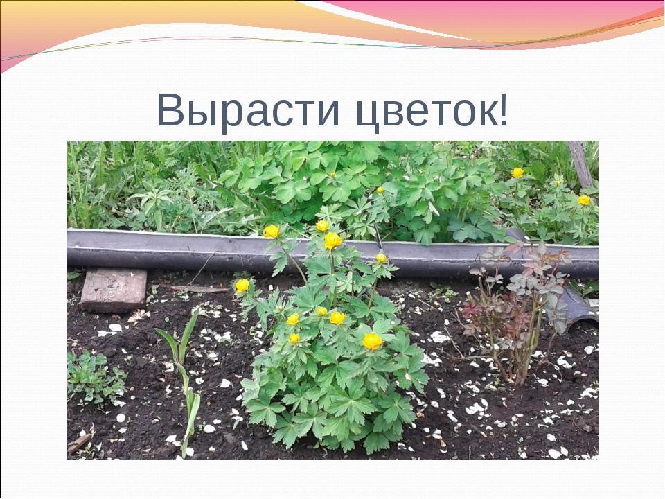Вырасти цветок!
