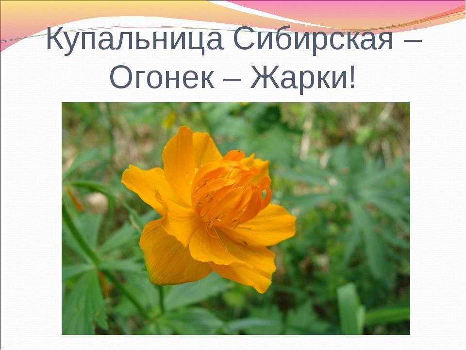 Купальница Сибирская – Огонек – Жарки!