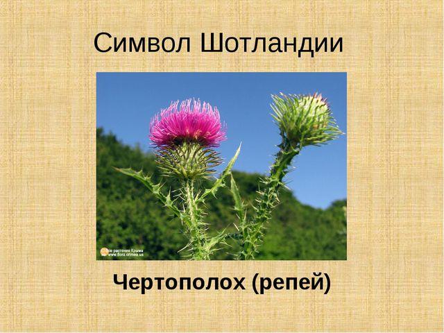 Символ Шотландии Чертополох (репей)