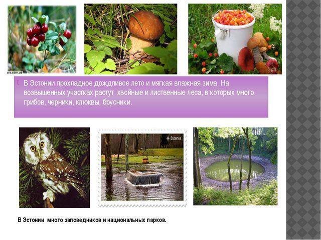 В Эстонии много заповедников и национальных парков. В Эстонии прохладное дожд...