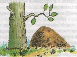 Ориентирование по пням и муравейникам Пни отдельно стоящих деревьев имеют кол