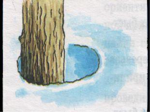 Ориентирование по другим местным предметам Весной снежные лунки у корней дере