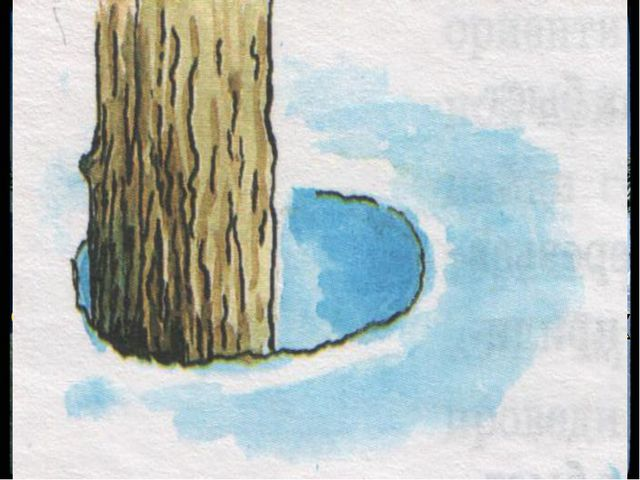 Ориентирование по другим местным предметам Весной снежные лунки у корней дере...