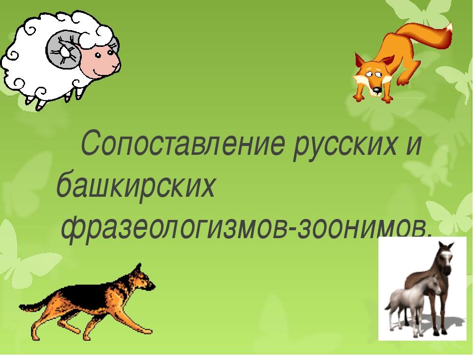 Сопоставление русских и башкирских фразеологизмов-зоонимов.