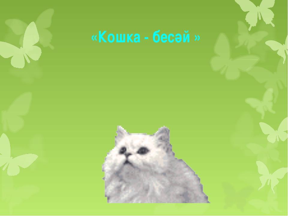 «Кошка - бесәй »