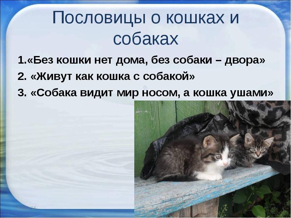 Пословиц про кошку и собаку