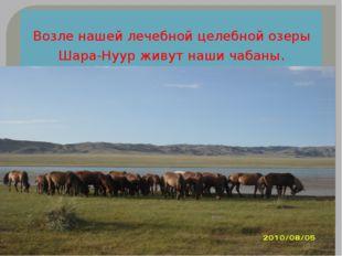 Возле нашей лечебной целебной озеры Шара-Нуур живут наши чабаны.