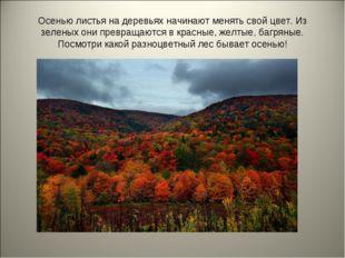 Осенью листья на деревьях начинают менять свой цвет. Из зеленых они превращаю