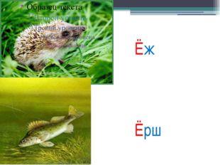 Ёж Ёрш