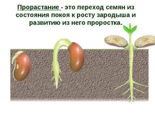 Прорастание - это переход семян из состояния покоя к росту зародыша и развити
