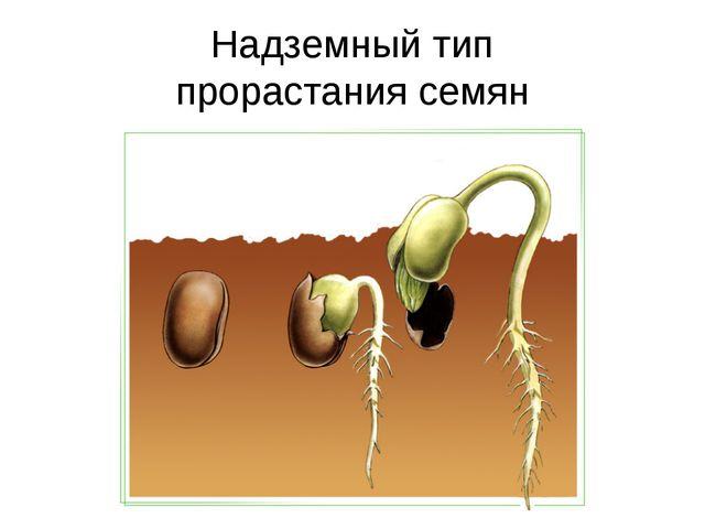 Надземный тип прорастания семян