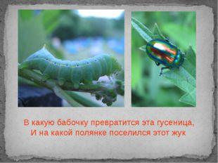 В какую бабочку превратится эта гусеница, И на какой полянке поселился этот жук