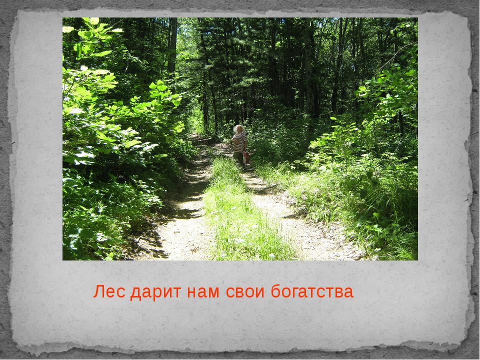 Лес дарит нам свои богатства