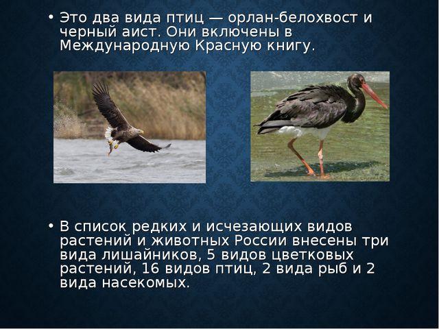 Это два вида птиц — орлан-белохвост и черный аист. Они включены в Международн...