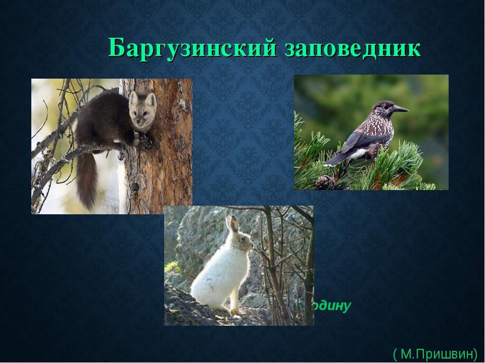 Баргузинский заповедник Защищая Родину ( М.Пришвин)