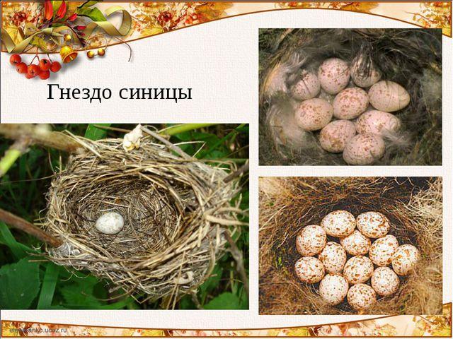 Гнездо синицы