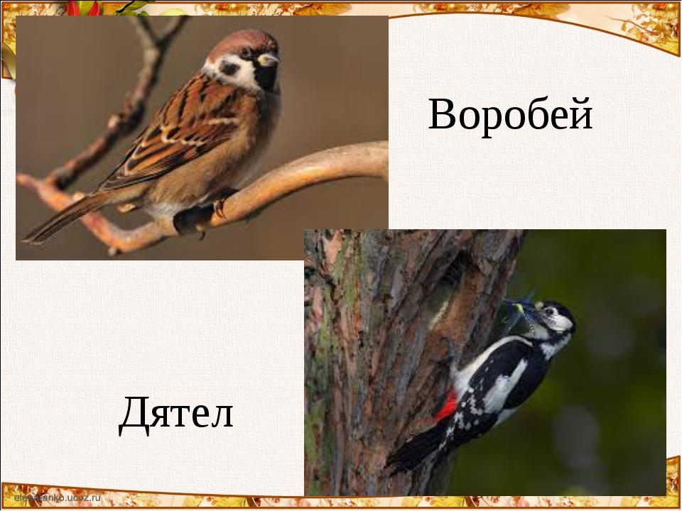 Воробей Дятел