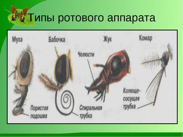 Типы ротового аппарата