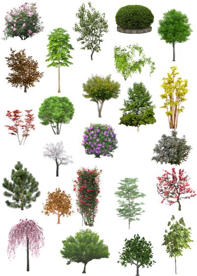 C:\Users\User\Desktop\деревья кустарники\картинки\1339167011_21252352.png