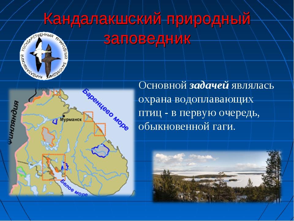 Кандалакшский природный заповедник Основной задачей являлась охрана водоплава...