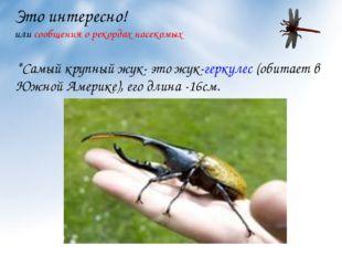 Это интересно! или сообщения о рекордах насекомых *Самый крупный жук- это жук