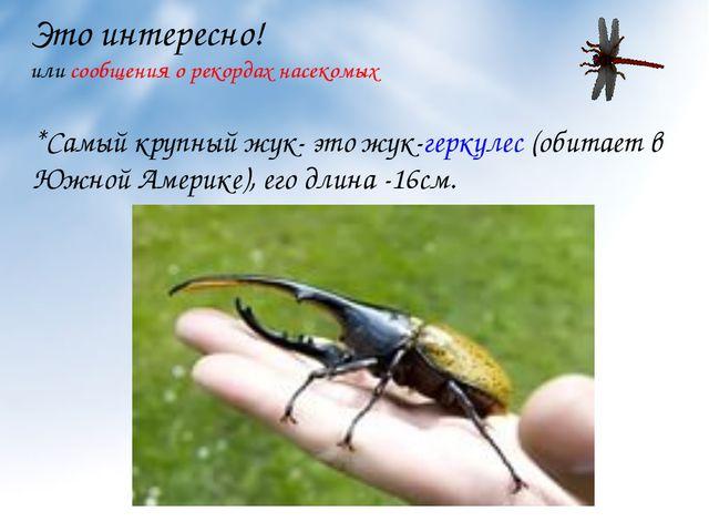 Это интересно! или сообщения о рекордах насекомых *Самый крупный жук- это жук...