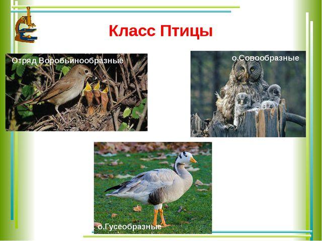 Класс Птицы Отряд Воробьинообразные о.Совообразные о.Гусеобразные