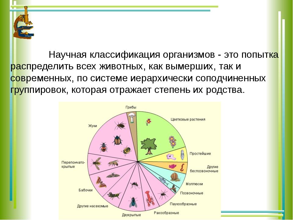 Научная классификация организмов - это попытка распределить всех животных, к...