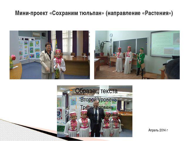 Мини-проект «Сохраним тюльпан» (направление «Растения») Апрель 2014 г