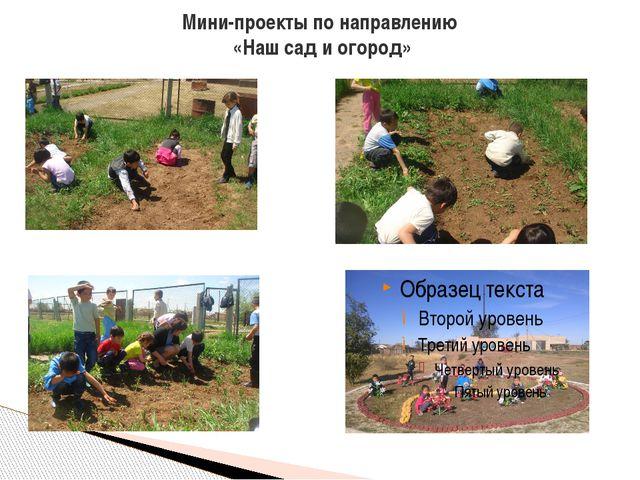 Мини-проекты по направлению «Наш сад и огород»