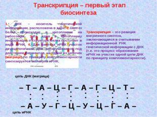 Транскрипция – первый этап биосинтеза – Т – А – Ц – Г – А – Г – Ц – Т – – А