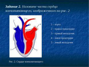 Задание 2. Назовите части сердца млекопитающего, изображенного на рис. 2 Рис.