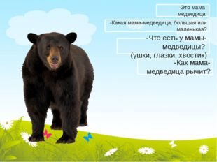 -Какая мама-медведица, большая или маленькая? -Что есть у мамы-медведицы? (уш