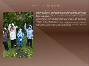 Проект «Посади дерево» На первом подготовительном этапе тема проекта обозначи
