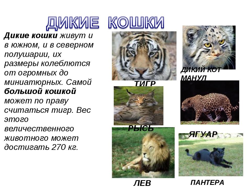 Как сделать сообщение о домашних животных