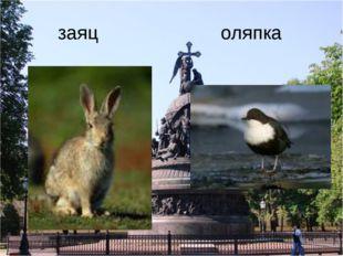 заяц оляпка