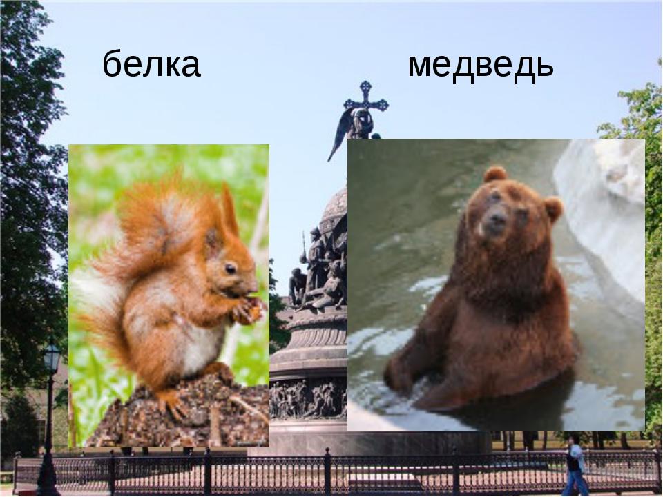 белка медведь