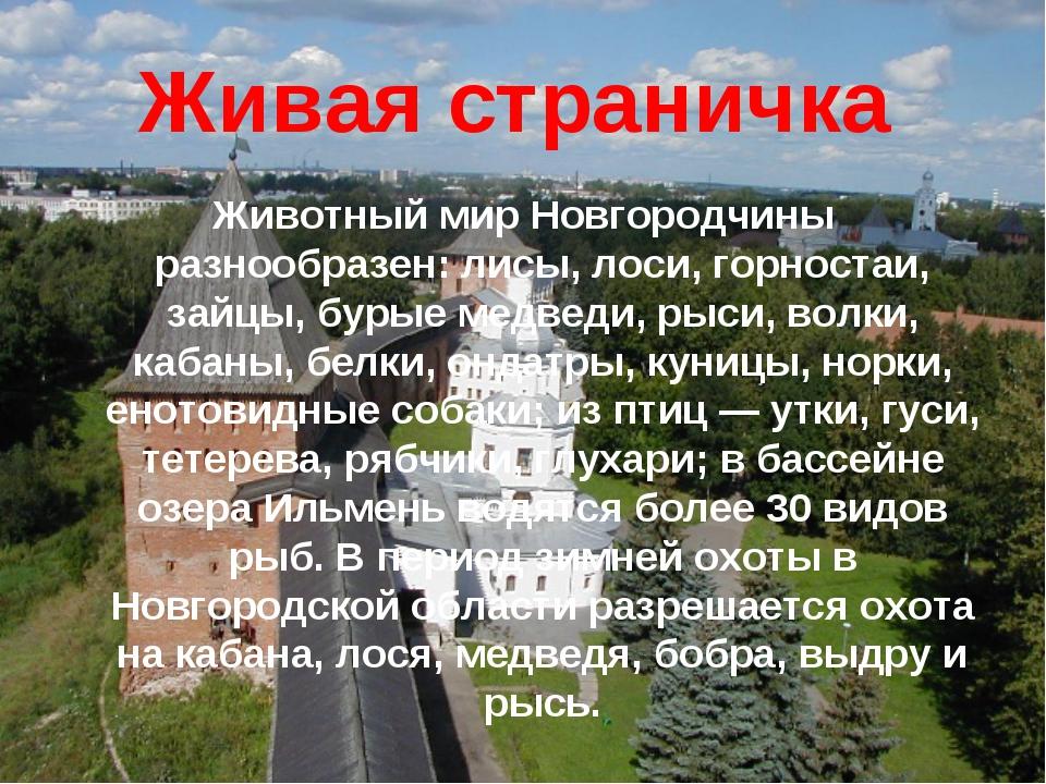 Живая страничка Животный мир Новгородчины разнообразен: лисы, лоси, горностаи...