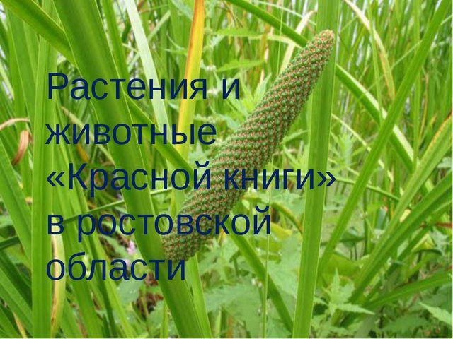 Растения и животные «Красной книги» в ростовской области