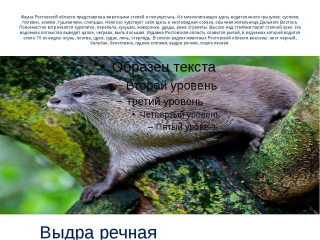 Фауна Ростовской области представлена животными степей и полупустынь. Из млек...