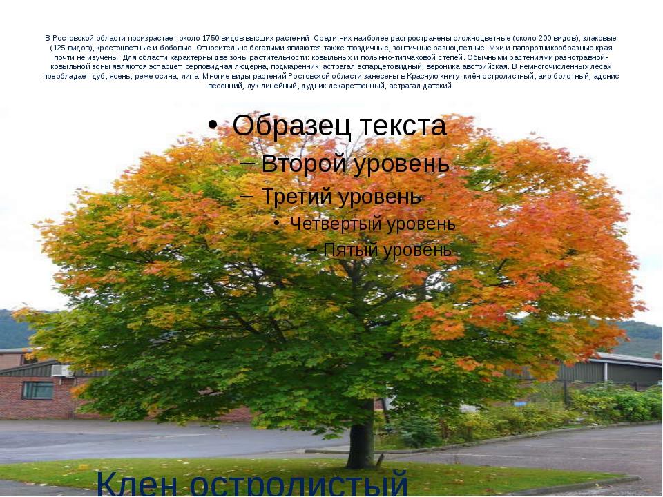В Ростовской области произрастает около 1750 видов высших растений. Среди них...