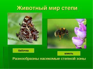 Животный мир степи Разнообразны насекомые степной зоны бабочка шмель